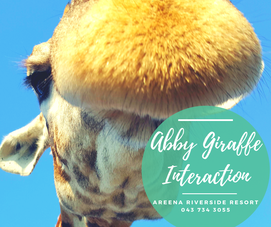 abby-interaction