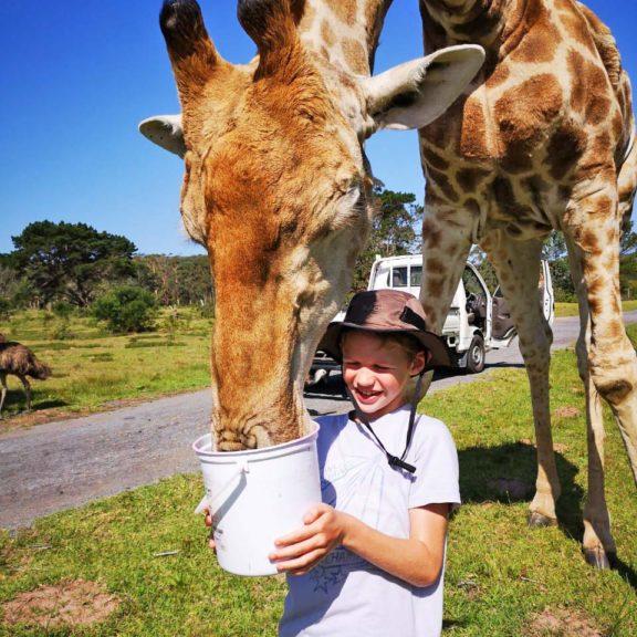Areena-Riverside-Resort-Abby-Giraffe-15
