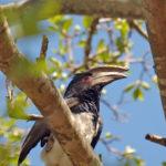 Areena-Riverside-Resort-Birding-1