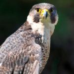 Areena-Riverside-Resort-Birding-10