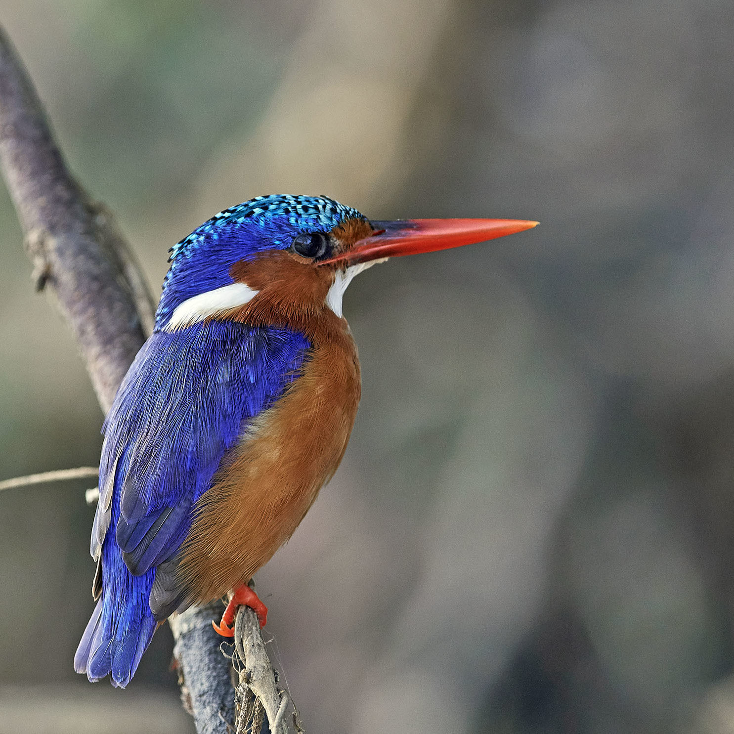 Areena-Riverside-Resort-Birding-12
