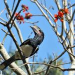 Areena-Riverside-Resort-Birding-2