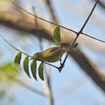 Areena-Riverside-Resort-Birding-3