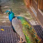 Areena-Riverside-Resort-Birding-4