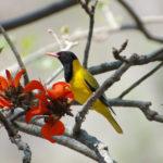 Areena-Riverside-Resort-Birding-8