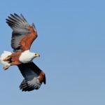 Areena-Riverside-Resort-Birding-9