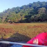 Areena Riverside Resort Experiences Sport Adventure Canoeing 6