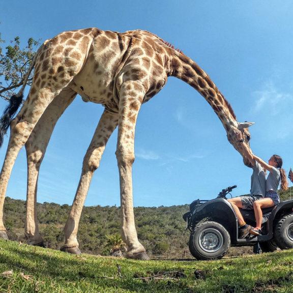 Areena-Riverside-Resort-Abby-Giraffe-21