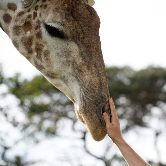 Areena-Riverside-Resort-Abby-Giraffe-22-cropped